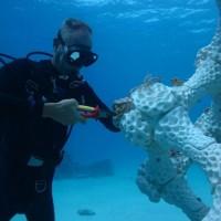 С помощью 3D-печати восстановят исчезающие коралловые рифы